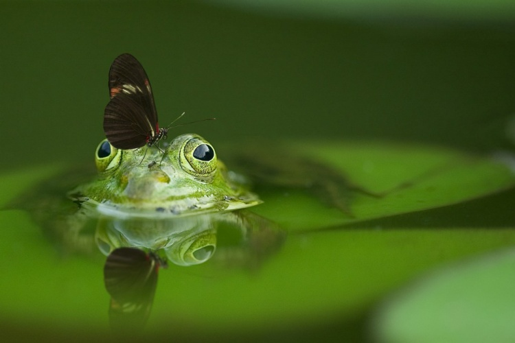 Frosch_Teich